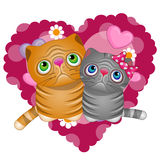 Two Cats Royalty Free Stock Photos