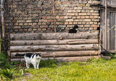 Two cats in backyard copy space. Green grass brick wall old house backyard Stock Photography