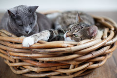 Two Cats in Basket Stock Photo