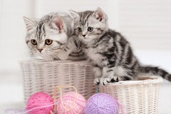 Two cats in a basket with balls of yarn Stock Photo