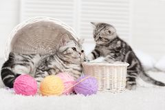 Two cats in a basket with balls of yarn Royalty Free Stock Photos