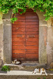 Two cats basking in the sun at the door Stock Photography