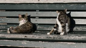 Two cats on a bench. Professional shot in 4K resolution. 024. You can use it e.g. in your commercial video, medical, business, presentation, broadcast stock video footage