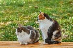 Two Cats on the Bench. Two Cats Sitting on the Wooden Bench Stock Images