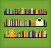 Two cats on bookshelves Royalty Free Stock Photos