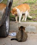 Cats at a car wheel stock images