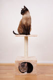 Two cats on cat tree. Two cats on small cat play tower or tree Royalty Free Stock Image