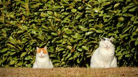 Two cats Stock Photos