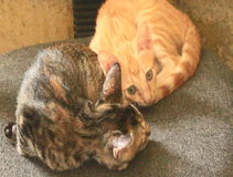 Two cats on a chair stock video footage