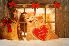 Two cats at Christmas sitting in front of a Fesnter in the snow Stock Photo