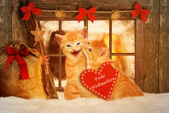Two cats at Christmas sitting in front of a Fesnter in the snow Stock Photos