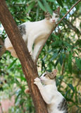 Two cats. Two cats climbing on the tree Royalty Free Stock Photo