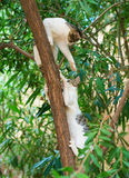 Two cats. Two cats climbing on the tree Stock Photos