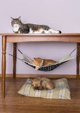 Two cats and a dog sleeping together Royalty Free Stock Image