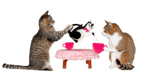 Two cats drinking milk at Table. On white background Royalty Free Stock Images