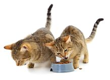 Two cats eat from a bowl royalty free stock image