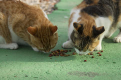 Two cats eating catfood on the green asphalt Royalty Free Stock Photography