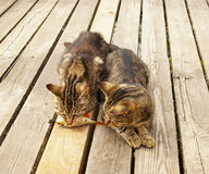 Two cats eating fish. Two cats on a pier eating fish Stock Image