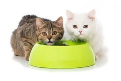 Two cats with a food bowl royalty free stock photos
