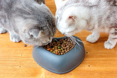 Two cats eating food from pet bawl in shape of heart Stock Photography