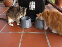 Two cats eating lunch. Feline pets enjoying their food on a porch in the caribbean stock footage