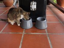 Two cats eating lunch. Feline pets enjoying their food on a porch in the caribbean stock video