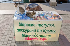 Two cats are EN table seller tourist excursions on the waterfron Royalty Free Stock Image