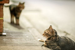 Two cats in an evening, Hong Kong Royalty Free Stock Photo