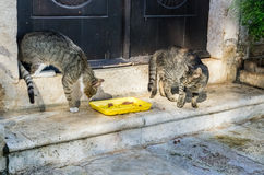 Two cats fight for food in Perast city, Montenegro Stock Photos