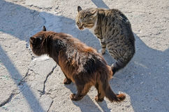 Two cats fighting Stock Photo