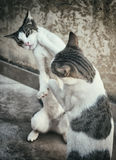 Two cats. Stock Image