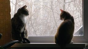 Two cats fighting on the windowsill. Two cats fighting on the window sill on the background of trees stock footage