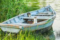 Two cats in a fishing boat. On the river Royalty Free Stock Photography