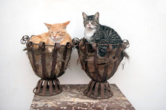 Two cats in flower pots Royalty Free Stock Photography