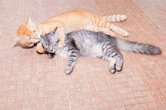 Two cats friendship orange and grey on the floor royalty free stock photography