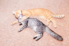 Two cats friendship orange and grey on the floor royalty free stock image