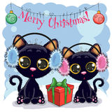 Two Cats in a fur headphones. With gift Royalty Free Stock Photos