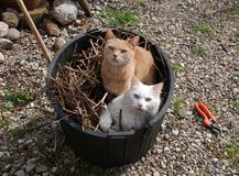 Two Cats in Garden Tub Stock Photo