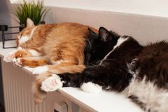 Two cats, ginger red and black and white, are sleeping peacefully on a warm battery, huddling together. Friendship of animals. Cat lies on the battery on a cold royalty free stock photography