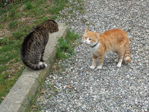 Two cats on gravel road. Red and gray cats on gravel path in the yard Stock Image