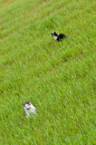 Two cats in green field Royalty Free Stock Images