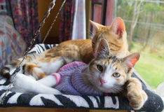 Two cats in the hammock Stock Photography