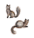 Two cats. A hand-drawn watercolor illustration of two furry cats. Wet paint, white background Stock Photos