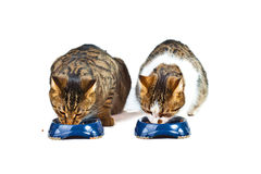 Two cats have their meal Royalty Free Stock Photography