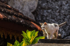 Two cats indonesia Stock Photo