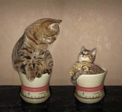Two cats on kitchen scales royalty free stock images