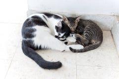 Two Cats kittens sleeping Stock Photo
