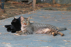 Two cats lay on marble floor Royalty Free Stock Image