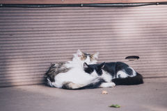 Two cats laying on eatch other near the wall outdoor, love picture Royalty Free Stock Photo