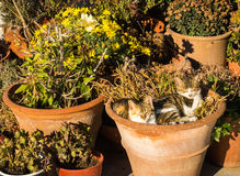 Two cats laying in the flower pot Stock Photo